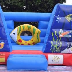 Salta salta acquario